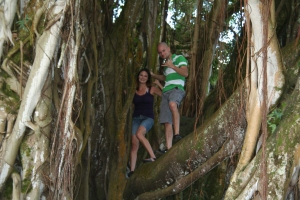We climbed this banyan tree!
