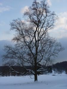 singletree