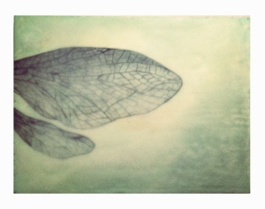 """Wings""Oil, graphite pencil, beeswax8"" x 6""$21"
